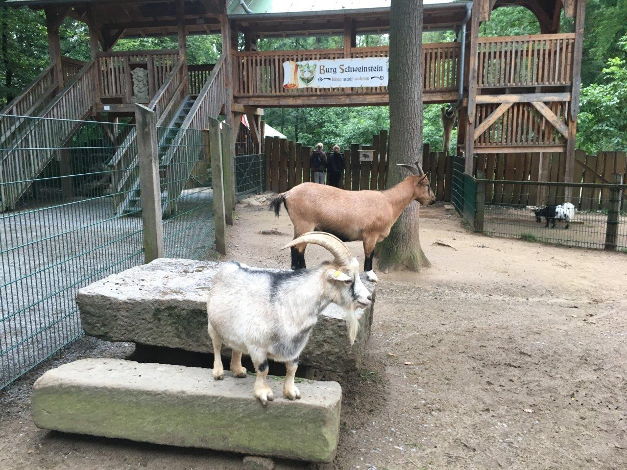 Klettergerüst Ziegen : Eine tour durch den wildpark schweinfurt wandern mit familie